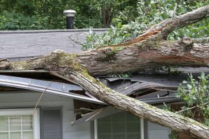 Storm Damage Repair Thonotosassa FL